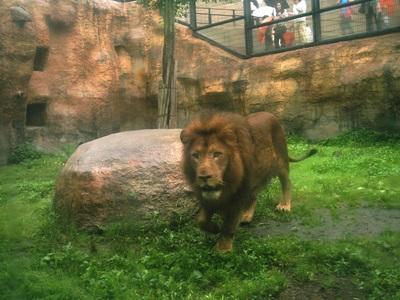 ライオン.JPG